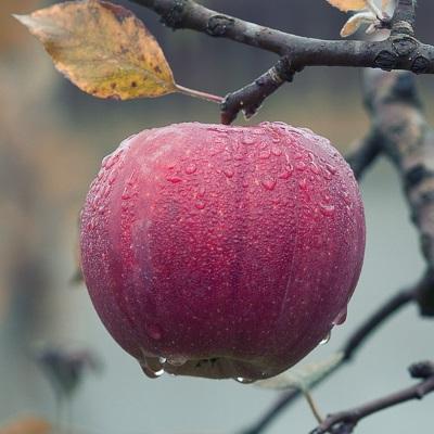 halloween apple samhain