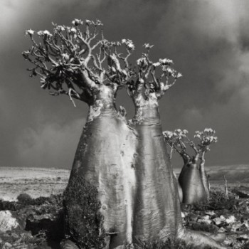 beth-moon-ancient-trees