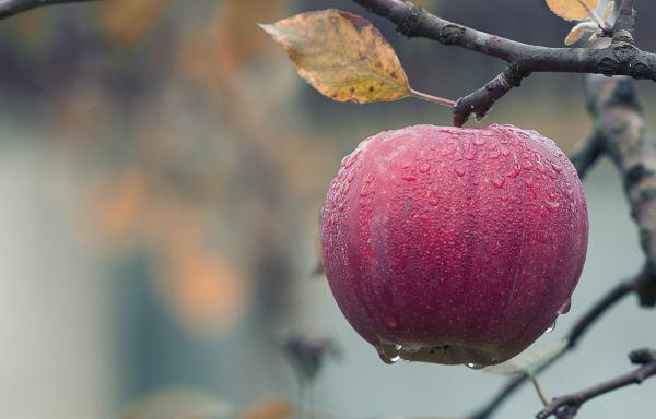 vegan hair masks apple cider vinegar
